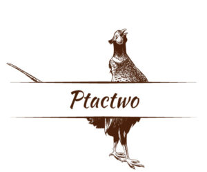 Mięso Ptactwo